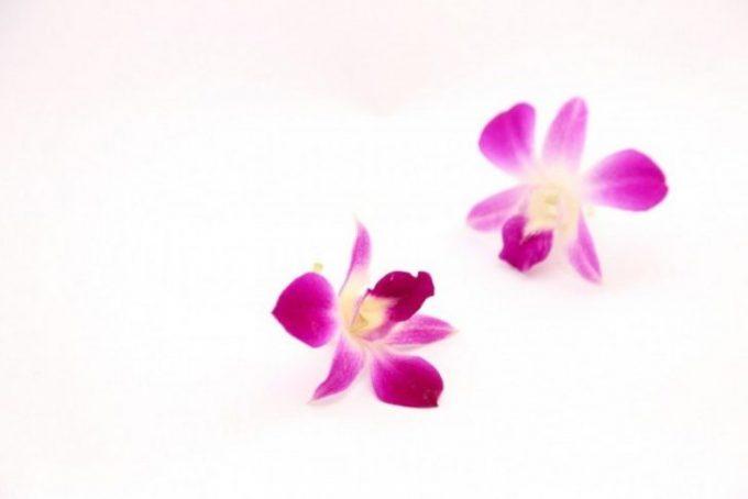 【購入ガイド】映画ちはやふる主題歌:Perfume