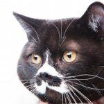 黒い猫の歌CD